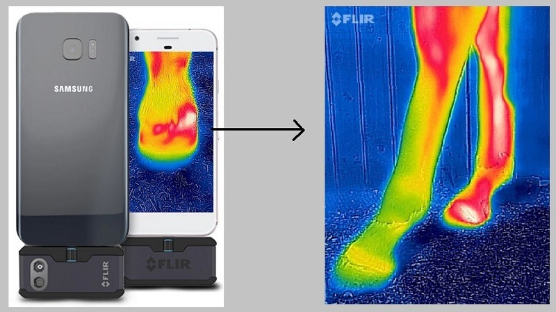 equine thermal imaging
