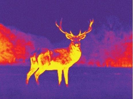 best thermal camera app