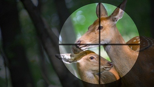 best long range scope